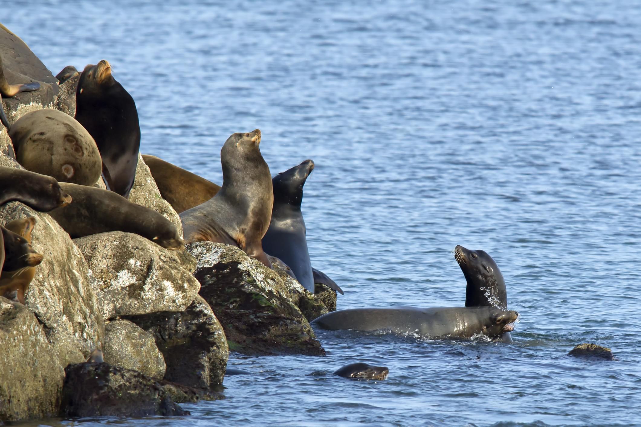 Lions de mer se prélassant sur un rocher
