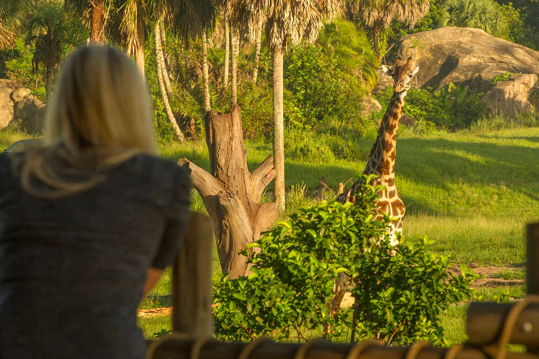 L'arbre de la vie se trouve au-dessus de la station Disney's Animal Kingdom