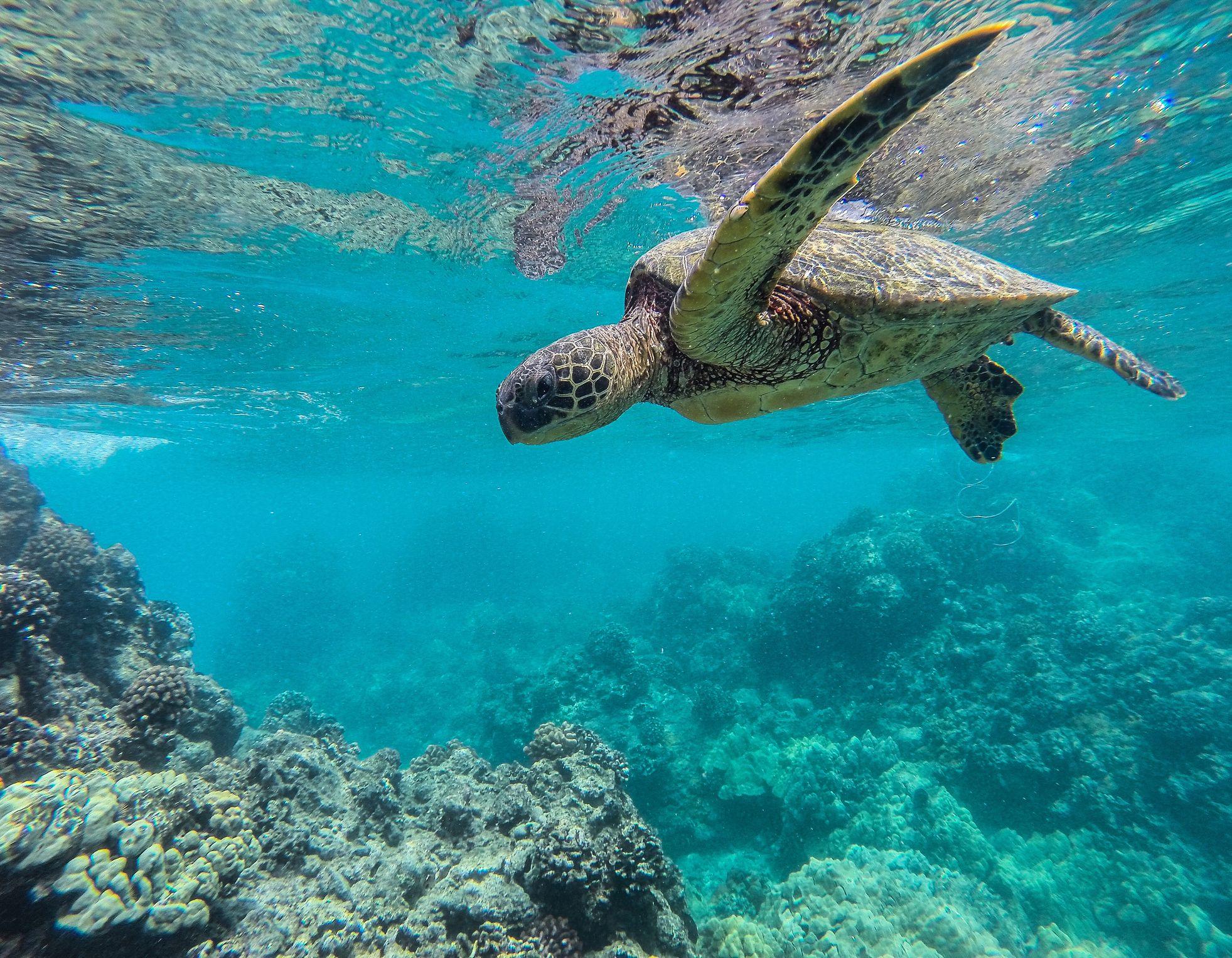 Grande tortue de mer sous l'eau
