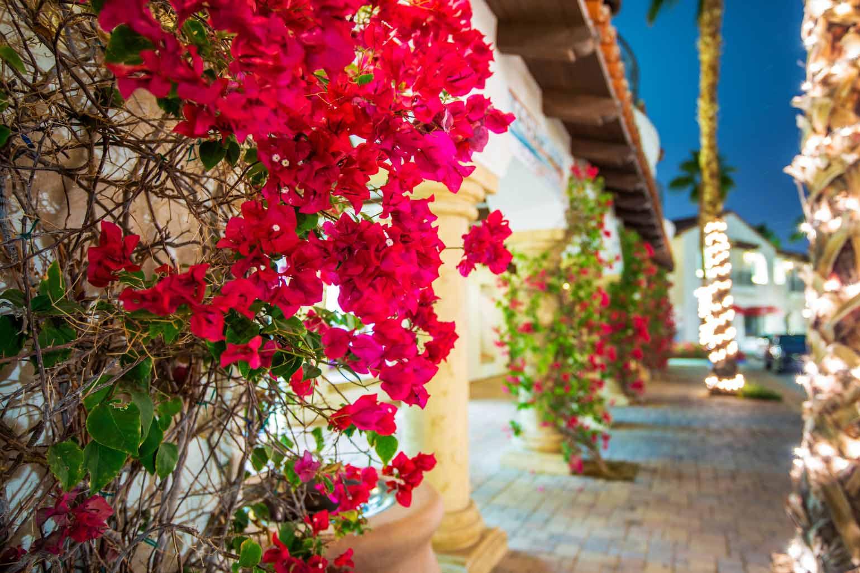 Californie en fleurs